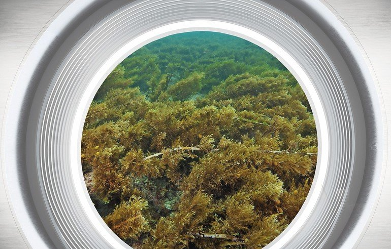 Flat_bottom_covered_with_short_brown_seaweed_underwater_reminds_of_grass_pasture_on_dry_land.